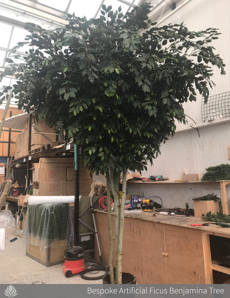 large artificial tree, ficus benjamina tree