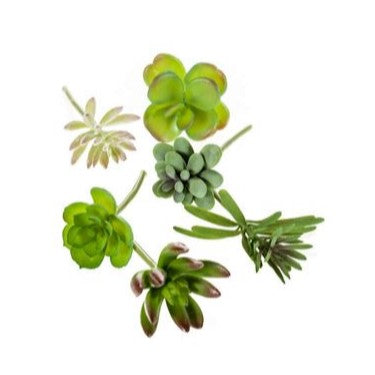 Artificial Plants - Mini Succulents
