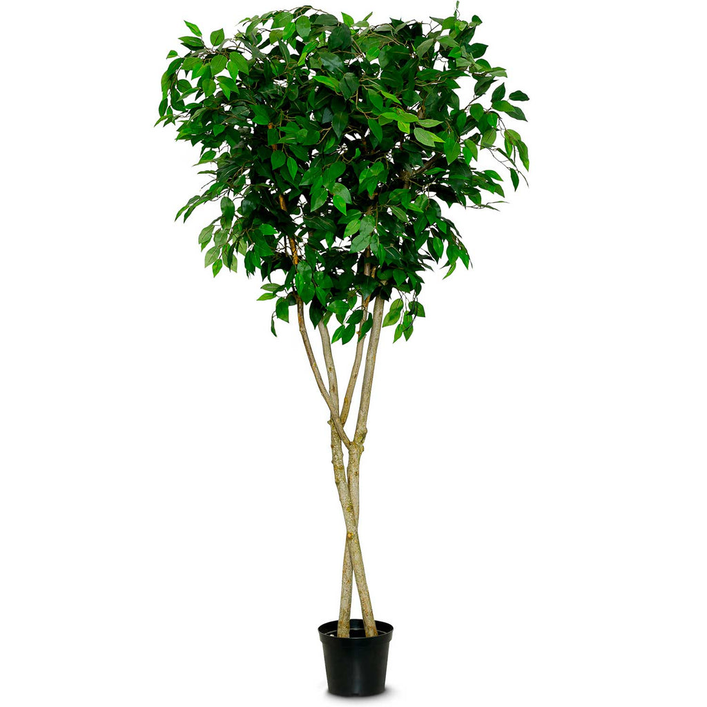 Artificial Ficus Benjamina Tree - Green Leaf