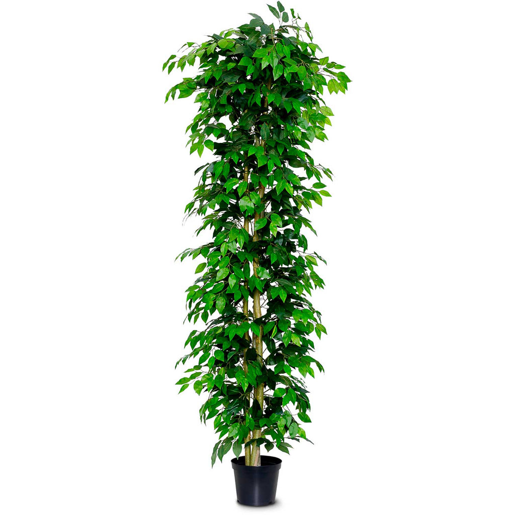 Artificial Ficus Nitida - Green Leaf