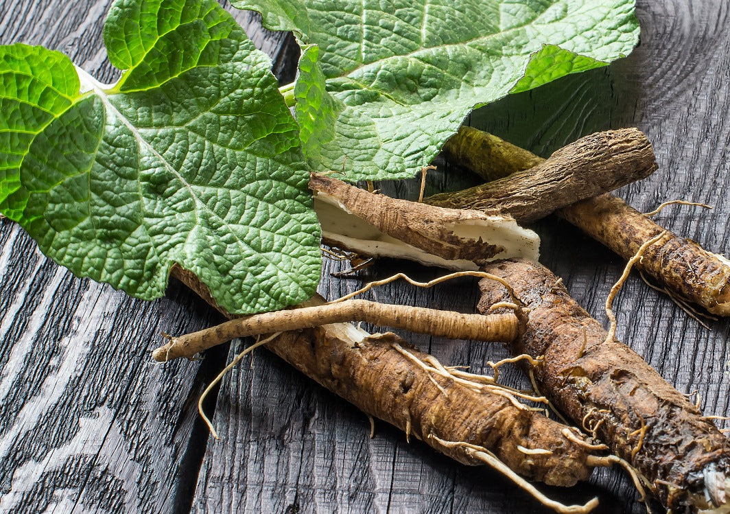 Burdock Root - Cleansing Your Body Inside and Out