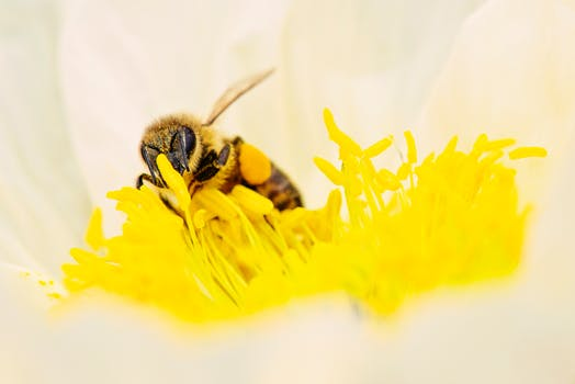 Bee Pollen, Propolis and Bee Venom