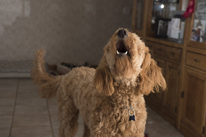 How to stop dog barking when someone knocks on the door