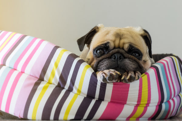 How do you choose the best bed for your dog?
