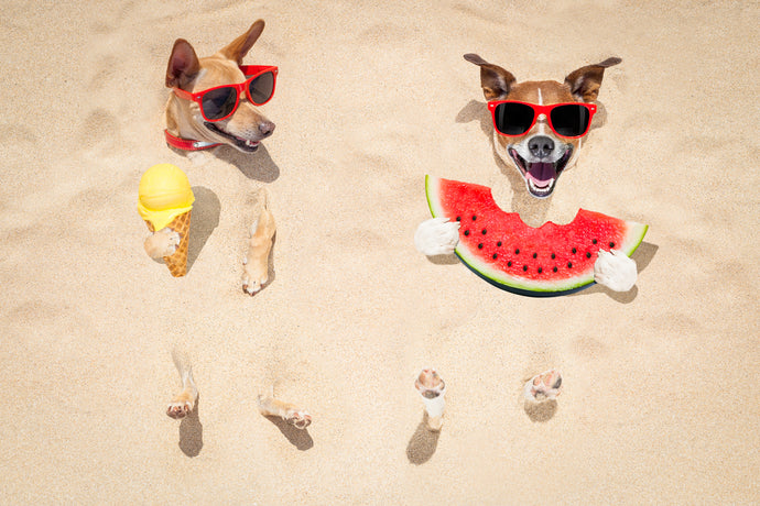 Fruit ice cream for dogs