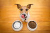 How to choose food for your dog?