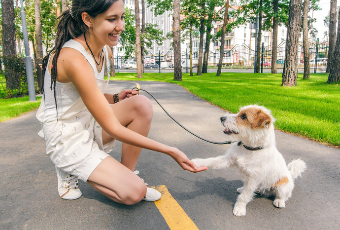 How to meet a dog for the first time ?