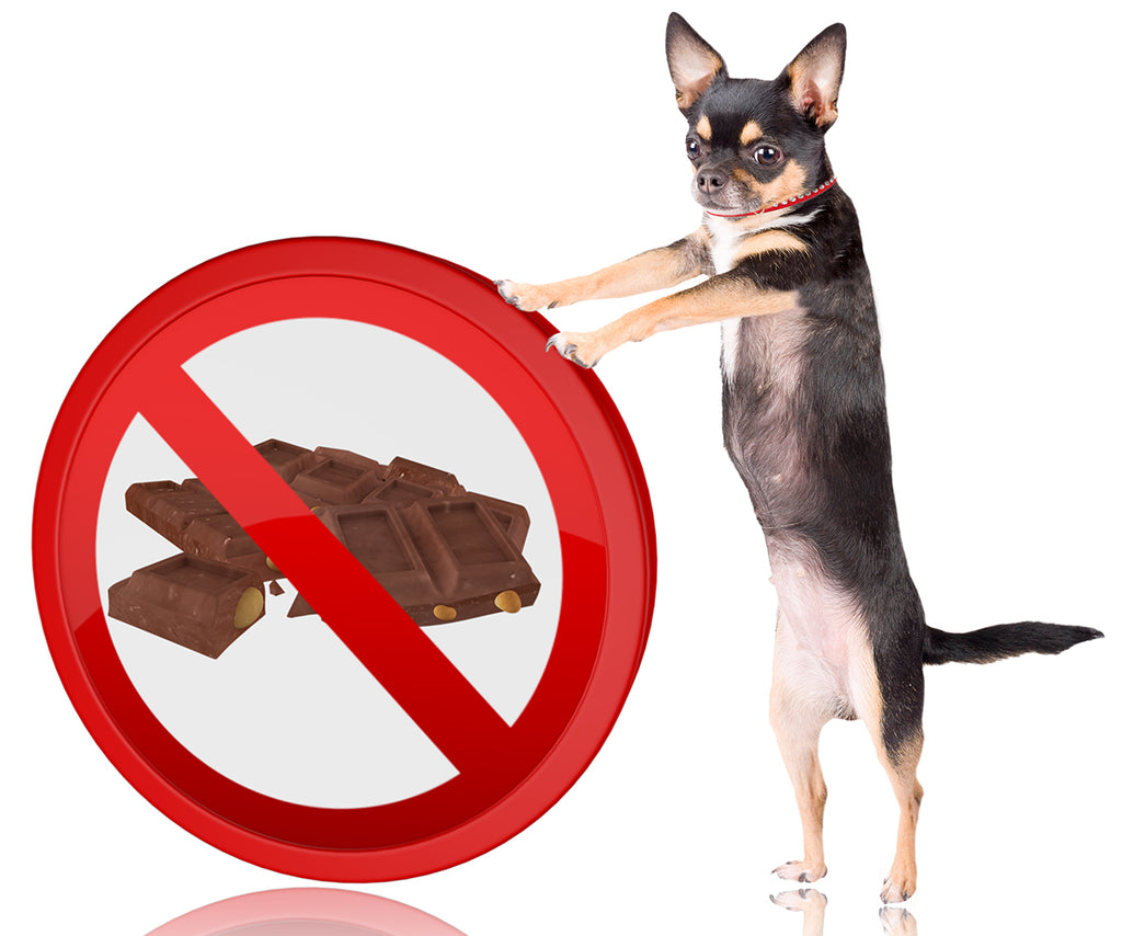 What dogs should NOT eat