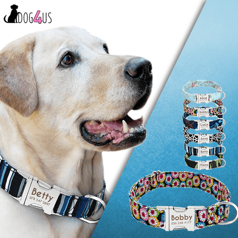 Image of Personalized Dog Collar - NYLON ADJUSTABLE | Model: Alice