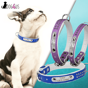 Personalized Dog Collar | Model: Nele