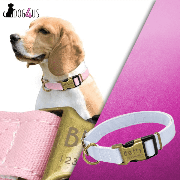 Personalized Dog Collar - Nylon Engrave Name ID | Model: QUIRINUS