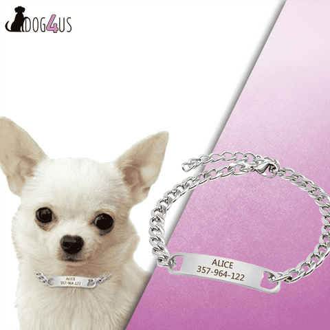 Personalized Dog Collar Training Collar with ID Dog Tag Choke Collar Metal Chain | Model: Flavia