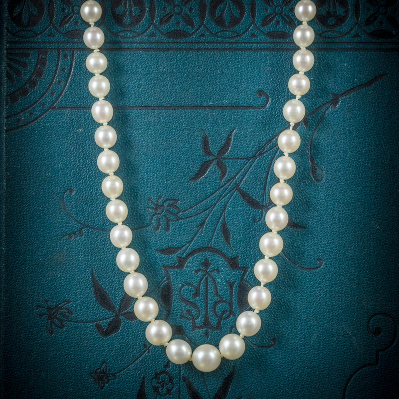 Antique Victorian Pearl Necklace Boxed Circa 1900 COVER