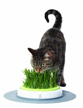 Load image into Gallery viewer, Catit Senses Grass Garden Cat Treat Toy