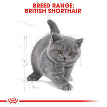 Load image into Gallery viewer, Royal Canin British Shorthair Kitten