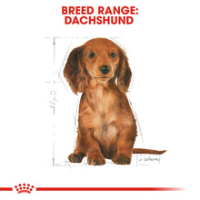 Load image into Gallery viewer, Royal Canin Dachshund Puppy