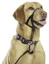 Load image into Gallery viewer, Halti Dog Head Collar