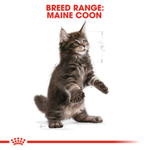 Load image into Gallery viewer, Royal Canin Maine Coon Kitten