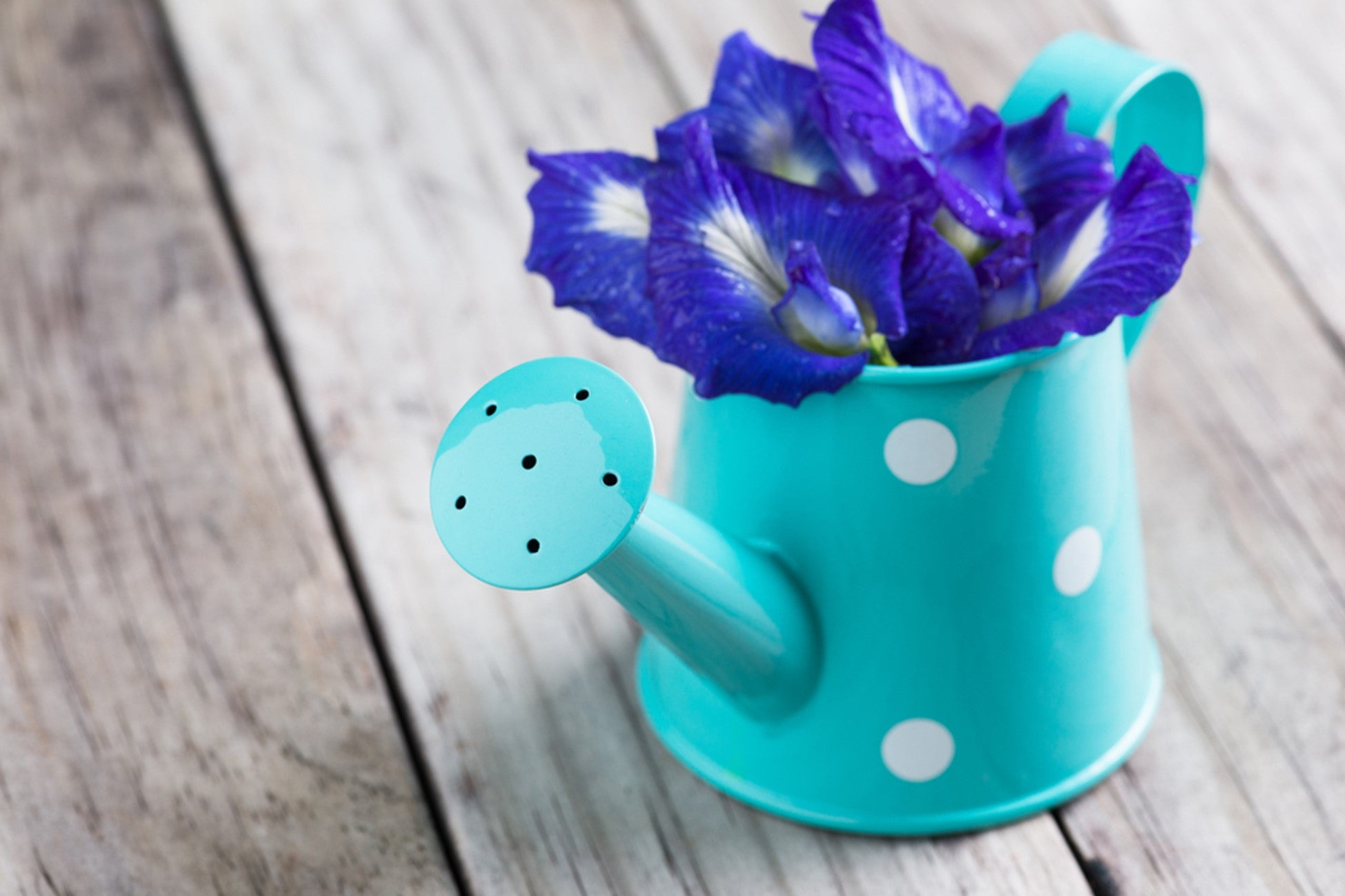 Butterfly Pea Hand Bouquet - Smiling Flora