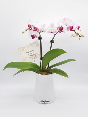 [V-day] Orchid Plant 001
