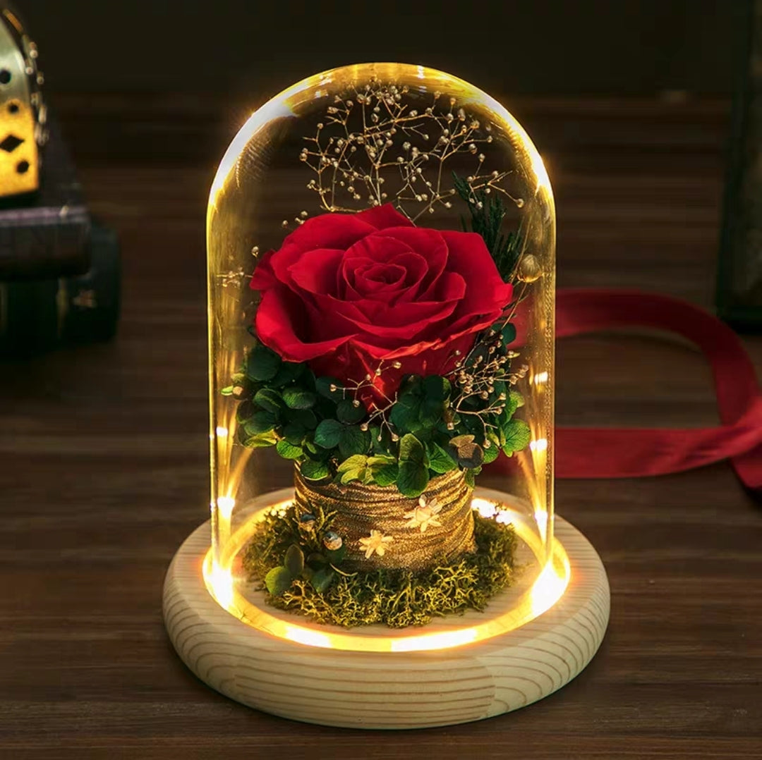 Preserved Flower 247 (w led lights)