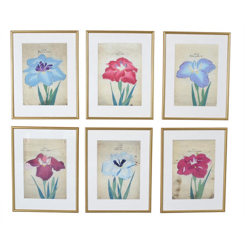Six Watercolor Irises