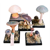 Collection of Mushroom Models