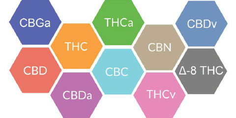 Image from https://receptranaturals.com/full-spectrum-cbd-entourage-effect/ full spectrum hemp extract and cannabinoids