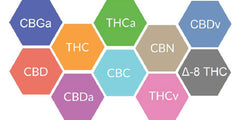 Image from https://receptranaturals.com/full-spectrum-cbd-entourage-effect/ full spectrum hemp extract and cannabinoids found in O2 Living hemp extract products
