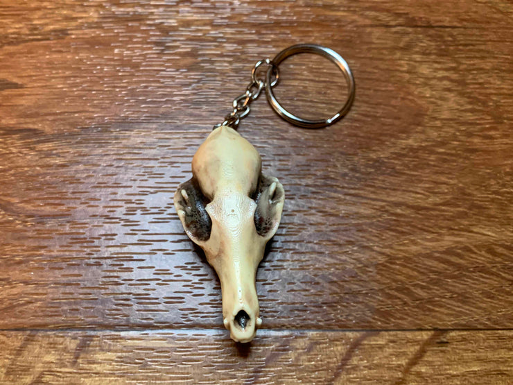 Faux Taxidermy Bat Skull