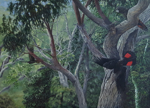 Red tailed black Cockatoos original painting Ian Griffiths World Parrot Trust