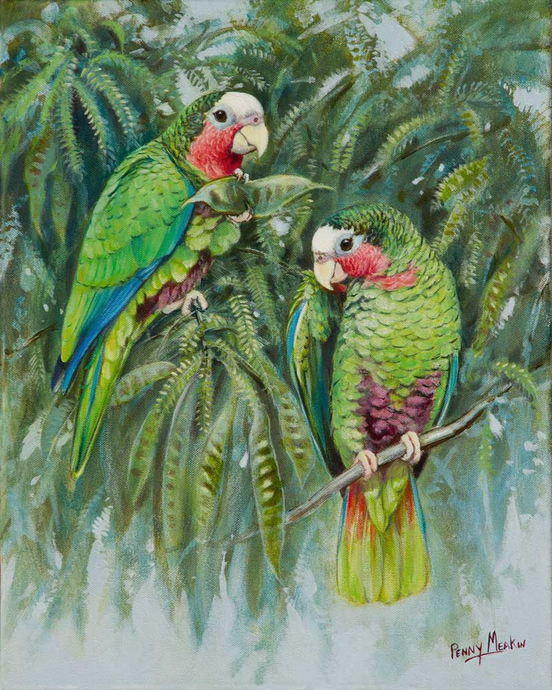 Cuban amazons original painting Penny meakin World Parrot Trust