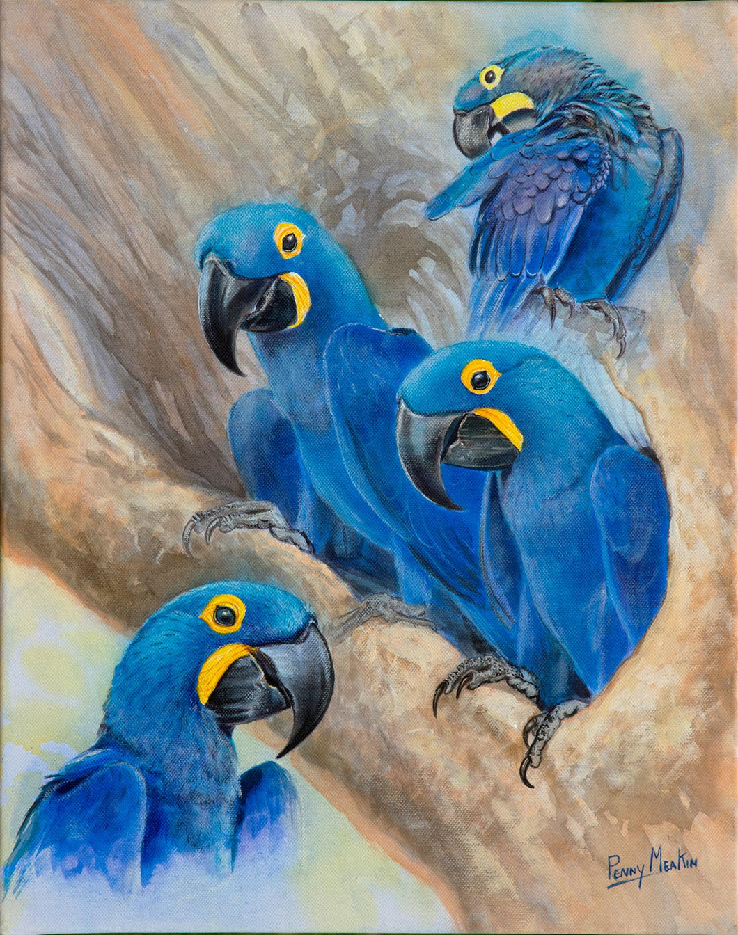 Hyacinth Macaw studies