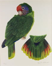 Red tailed Amazon Limited edition print Elizabeth Butterworth World Parrot Trust