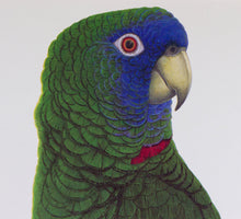 Red-Necked Amazon Parrot