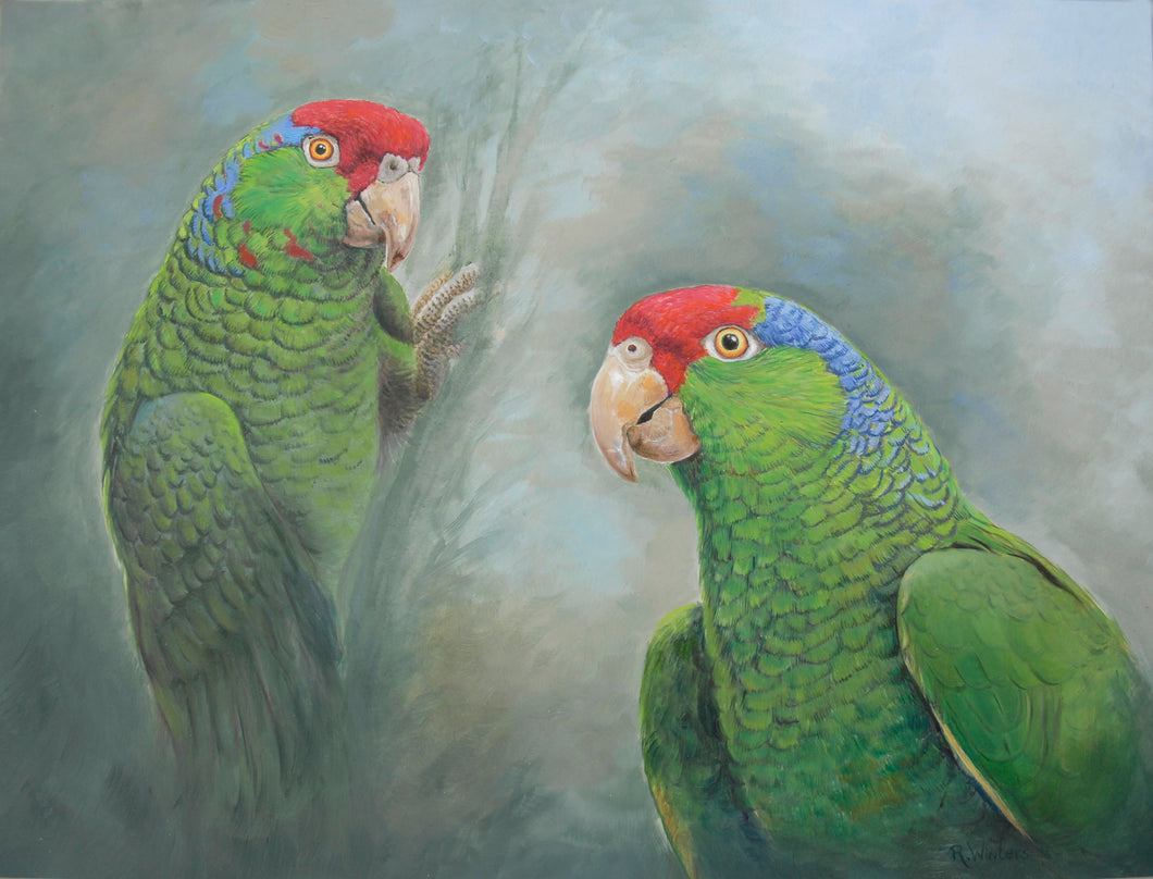 Red crowned amazon original painting Ria winters World Parrot Trust