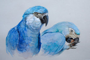 spix's macaw original painting Ria winters World Parrot Trust
