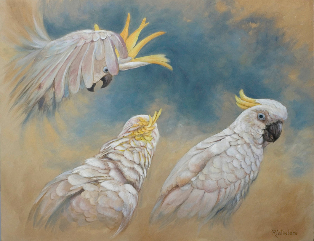 Sulphur crested cockatoo original painting Ria winters World Parrot Trust