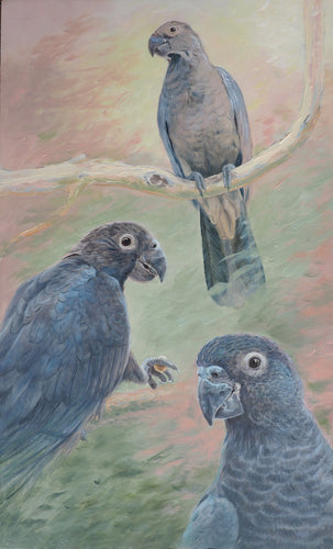 Greater vasa parrot original painting Ria winters World Parrot Trust