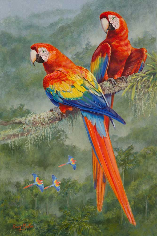 Scarlet Macascarlet Macaw Original Painting Penny Meakin World Parrot Trust Feather Artworks