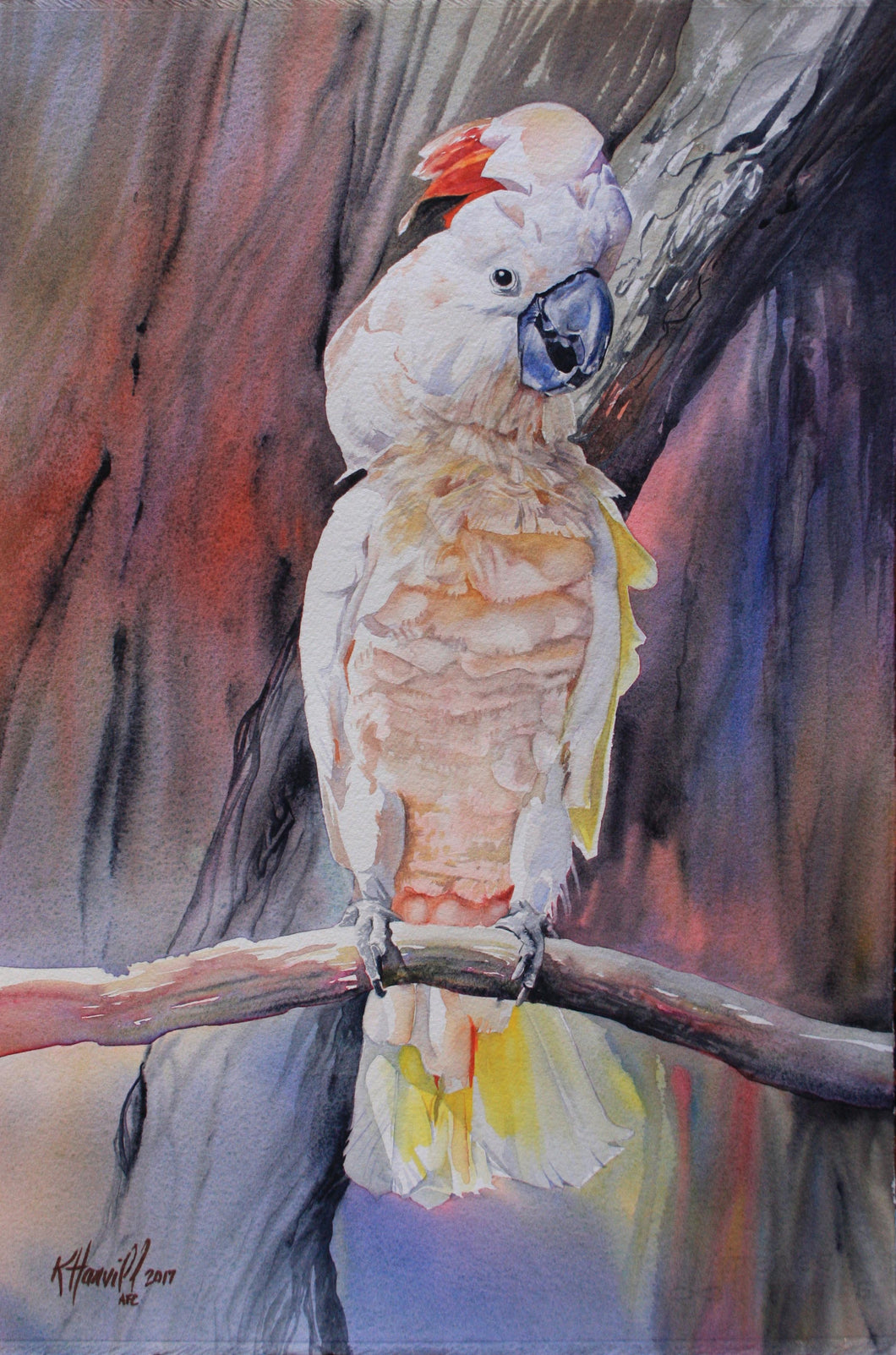 Salmon crested Cockatoo original painting Kitty Harvill World Parrot Trust