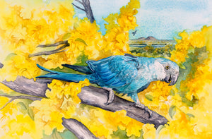 Spix's Macaw original painting Kitty Harvill World Parrot Trust