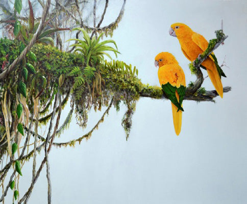 Golden Conures Limited edition print Ian Griffiths World Parrot Trust