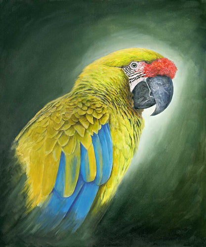 Great Green  Macaw Limited edition print Ian Griffiths World Parrot Trust