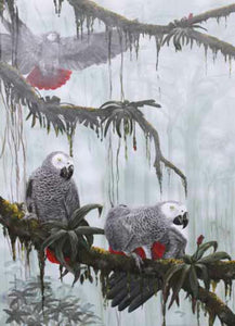 African grey Parrot Limited edition print Ian Griffiths World Parrot Trust