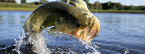 How To Fish Crankbaits For Bass In The Fall