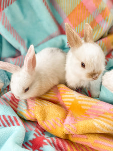 PRE ORDER - My Little Easter Blanket ©