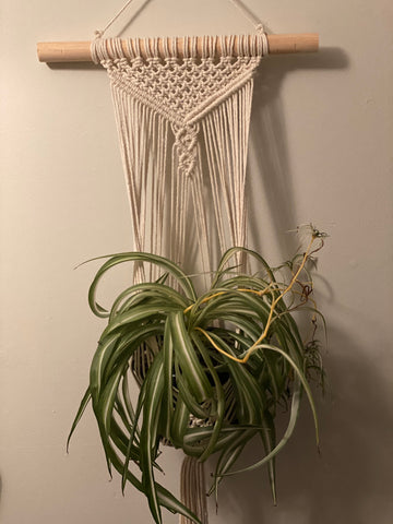 Plant wall hanging tutorial & kit
