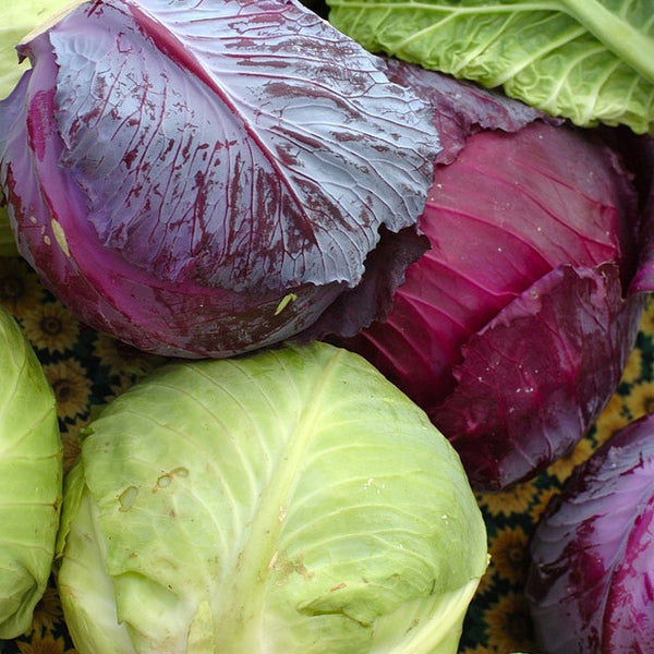 Red/White Cabbage