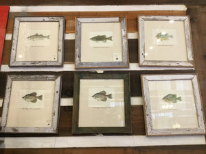Custom Fish Prints